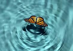 Butterfly on water