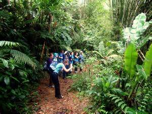 Tobago oldest rain forest